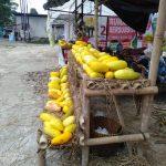 Harga Timun Suri di Baros Naik, Ini Penyebabnya